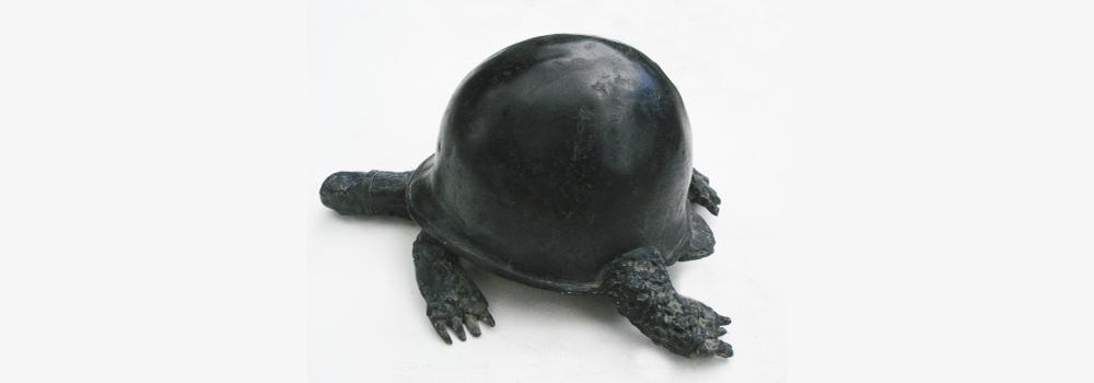 Large rachid khimoune   american turtle