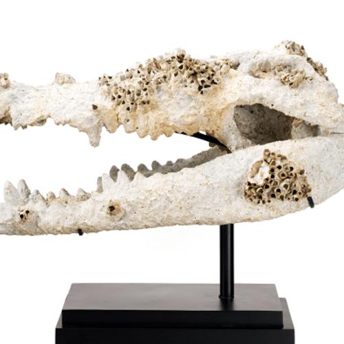 Thumb piece unique travaille fossilisation avec la mer   3200 euro 85cm