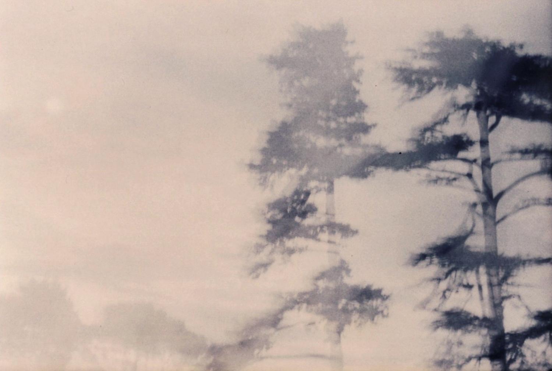 Large 255 au temps des arbres . ete 2004 by herve saint helier