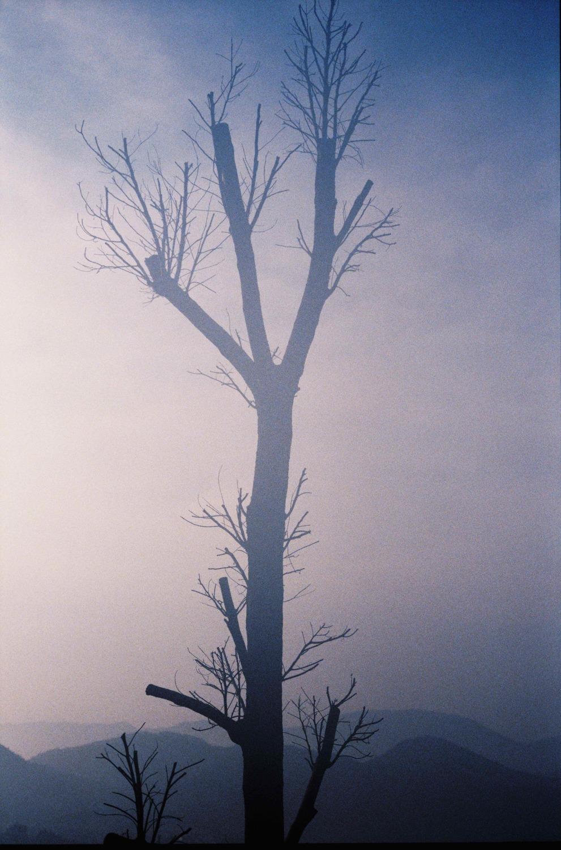 Large hsh le fantome de l arbre . fall 2007 by herve saint helier
