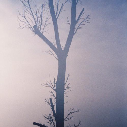 Thumb hsh le fantome de l arbre . fall 2007 by herve saint helier