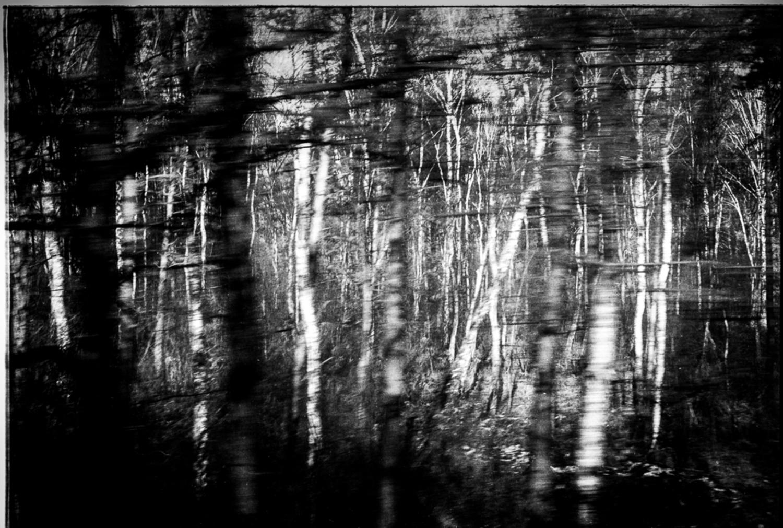 Large frederic bien auschwitz trees oswiecim pl 2012 trix400 02