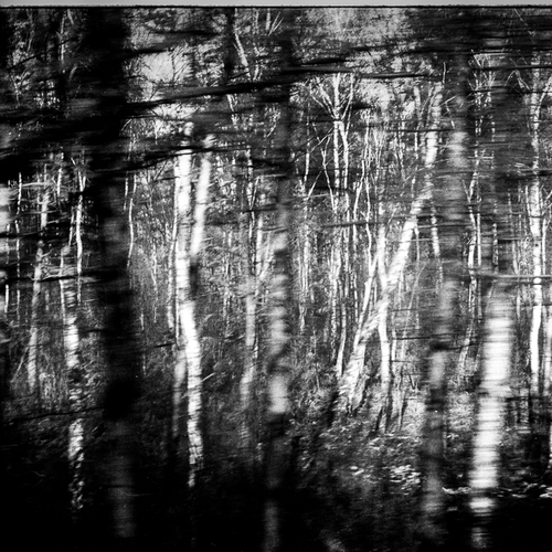 Thumb frederic bien auschwitz trees oswiecim pl 2012 trix400 02
