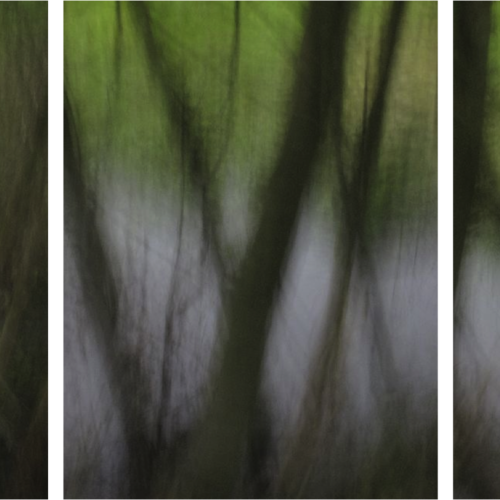 Thumb triptych spring